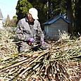 伐採した竹を等間隔に切り揃え