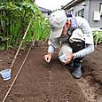 種床にキャベツの種を播く