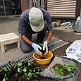 のらぼう菜の苗を取り上げ移植