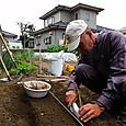 短形の山いもを植え付ける