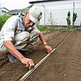 木板で種播き溝の印をつける