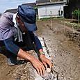 秋ジャガイモ2種の種芋を植え付ける