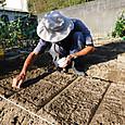 小松菜の種を半袋播く