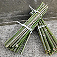 種播き列標示竹の棒を切り出す
